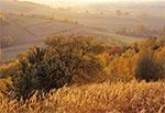 Jesienny pejzaż roztoczański - okolice wsi Kol. Gorajec-Zagroble