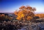 Naturalny zakątek roztoczański - okolice wsi Kol. Gorajec-Zagroble
