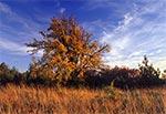 Jesień na Roztoczu Szczebrzeszyńskim