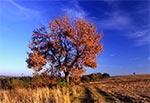 Feeria jesiennych barw na Roztoczu Środkowym - między Starą Hutą a Senderkami