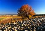 Pejzaż Padołu Zamojskiego - pola wsi Wychody