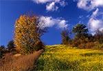Roztocze Środkowe - pola wsi Sochy