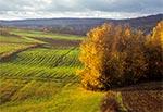 Pola wsi Kosobudy