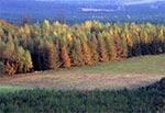 Modrzewiowe lasy Roztocza Środkowego