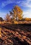 Lessowe pole na Roztoczu Szczebrzeszńskim - wnętrze regionu