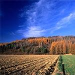 Jesień na Roztoczu Zachodnim - okolice wsi Chłopków