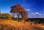 Na stoku Bukowej Góry od strony wsi Sochy