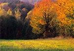 Jesień na Roztoczu Szczebrzeszyńskim - wnętrze regionu