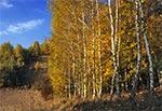 Jesienny zagajnik na Działach Grabowieckich