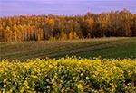 Grzęda Sokalska jesienią - okolice Ruszowa