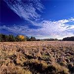 Dzikie łąki między Hrebennem a Korniami