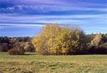 Na łąkach Dahan sielską jesienią, kiedy słońce grzeje miło, a giez nie kąsa