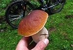 Na grzybobraniu rower daje tę niebywałą korzyść, że można błyskawicznie przemieścić się na sporą odległość w lesie, kiedy na przykład w danym miejscu okaże się, że inny grzybiarz był przed nami ;-)