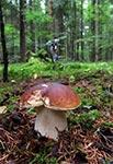 Na grzybobraniu w lasach Roztocza