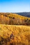 Listopadowe rajdy rowerowe po Roztoczu Zachodnim