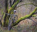 Znowu coś aktualnego - z eksploracji terenów bagiennych 12 grudnia 2020. Zima jest idealna do eksploracji niedostępnych latem miejsc, bo krzaczory nie mają liści, uschłe trawy przydusił do ziemi wcześniejszy śnieg. Nie ma też owadów, zwłaszcza kleszczy. Pochmurny dzień, kiedy nie ma w ogóle śniegu jest najlepszy do fotografowania takich bagiennych lasów, gdyż nie przeszkadza nadmierny kontrast, panuje tam wówczas klimat, który nazwałbym - omszałym. Uważajmy tylko na oczy podczas przedzierania się przez gęstwinę gałęzi (Wielkość oryginalnego pliku - 117 mln pix.)