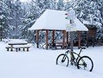 Florianka zimą
