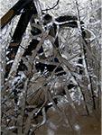 Oblodzenie wszystkiego co wystaje ponad poziom śniegu - między Hubalami a Wychodami