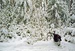 Ten las mnie więzi... - Krasnobrodzki Park Krajobrazowy