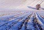 Zimowa sceneria na Roztoczu Zachodnim