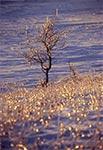 Kryształowa zima roztoczańska na polach wsi Wychody