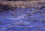 Czubki traw wystających spod głębokiego śniegu