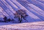 Zima na polach wsi Obrocz