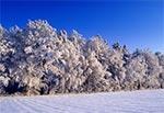 Zima na Wzniesieniach Urzędowskich