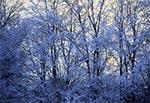Mroźny zimowy poranek na Roztoczu
