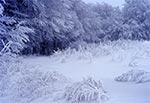 Roztoczański zakątek w zimowej szacie - okolice wsi Rachodoszcze