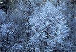 Zima na Roztoczu Zachodnim