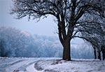 Uśpiona przyroda zimą