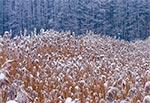 Zamojski zalew w zimowej scenerii