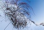 Zimowe owoce - okolice Bliżowa