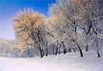Pogodny zimowy poranek w Zamościu nad Łabuńką. Drzewa niestety już nie istnieją, bo zostały wycięte