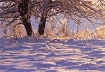 Kryształowe drzewa - oblodzenie na stokach Bukowej Góry