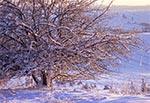 Oblodzone drzewa na stoku Bukowej Góry