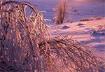 Kryształowe drzewa na stokach Bukowej Góry