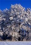 Fantastyczna roztoczańska zima