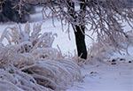 Pamiętna zima roku niepamiętnego, kiedy to wszystko pokryła gruba warstwa lodu, tworząc iście zlodowaciałe pejzaże