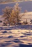 Kryształowa Roztoczańska Zima - pola wsi Sochy