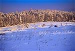 Spojrzenie na lasy RPN z Wysokiej Góry koło Górecka