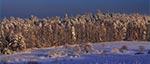 Widok na lasy RPN z Wysokiej Góry koło Górecka Starego