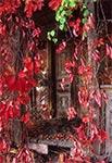Drzwi starej, opuszczonej chałupy na Działach Grabowieckich