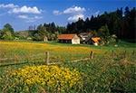 Wieś Wojda
