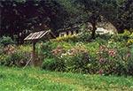 Taki ogród to raj dla owadów zapylających - Słotwina koło Dziewięcierza
