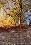 Mur pałacu Łosiów w Narolu w najlepszym z możliwych anturażu