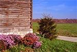 Tradycyjne budownictwo jest najpiękniejsze - Kondraty koło Hoszni Ordynackiej