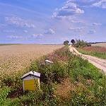 Tu powstaje miód gryczany - przy drodze z Krasnobrodu do Tomaszowa Lubelskiego