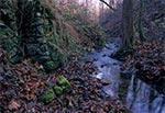 Ruiny młyna w Polance Horynieckiej